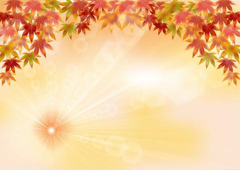 Autumn leaves 129