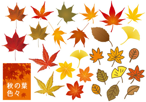 Various autumn leaves