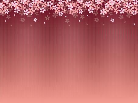 Cherry blossom background 4