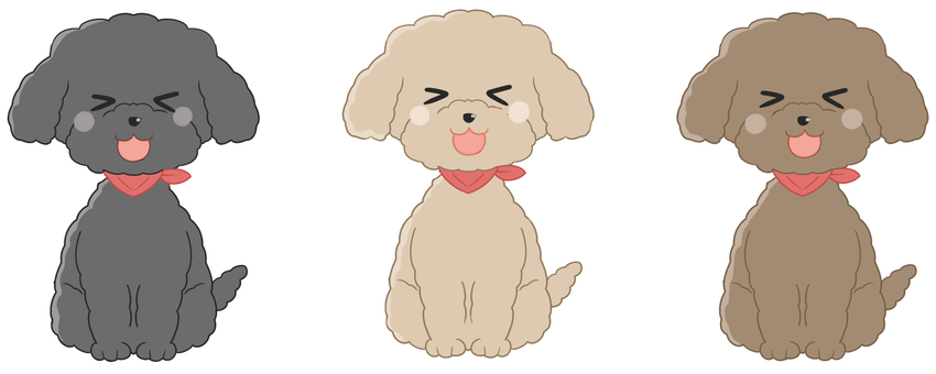 Toy poodle pleases