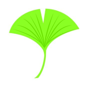 Ginkgo biloba (yellow green)