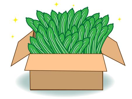 Cucumber (in cardboard)