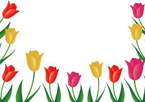 Tulip illustration frame