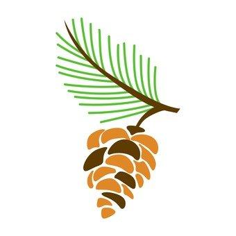 Northern European fruit (pine cones and pine cones)