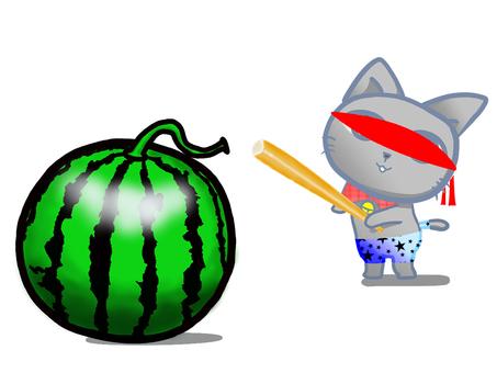 Cute cat challenges watermelon split