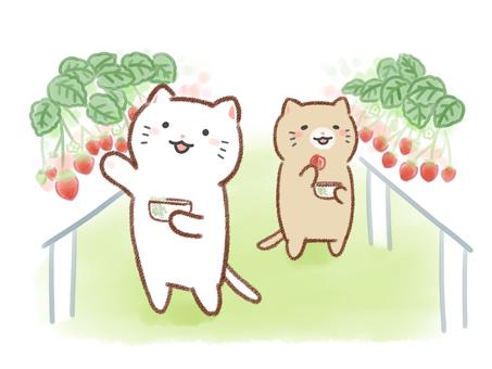 고양이와 딸기 따기