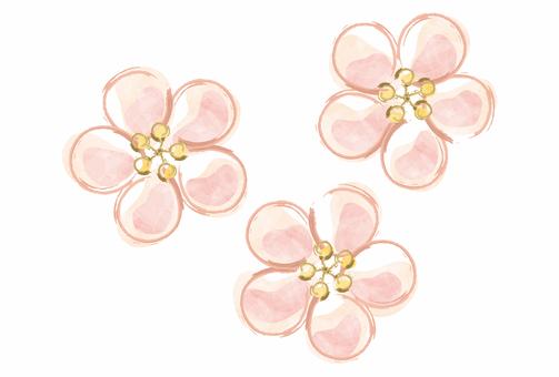Plum / plum blossom