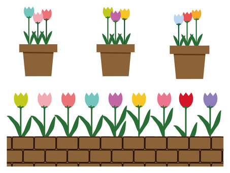 Colorful tulip Flowerpot and flower bed