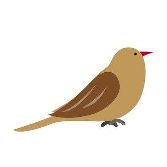 A wild bird