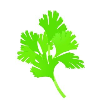 Illustration of Italian parsley