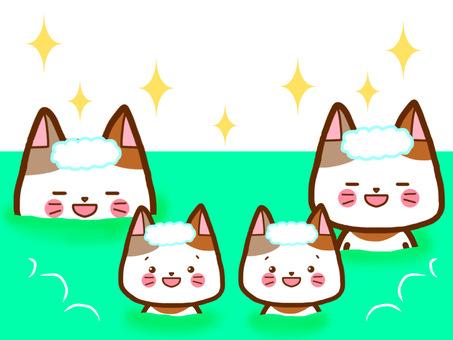 목욕 가족 고양이 씨