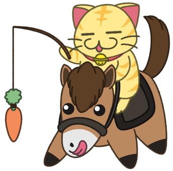 Dry cats (horses)