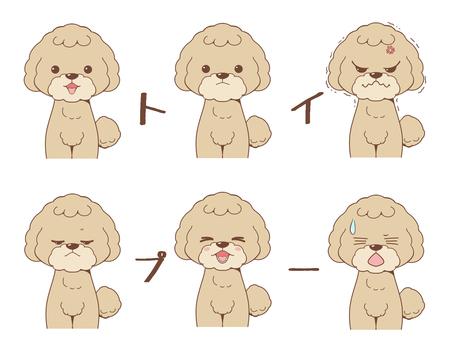 玩具貴賓犬