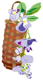 Wisteria wisteria
