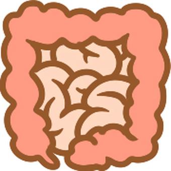 シンプルな大腸、小腸
