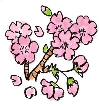 Sakura cherry tree