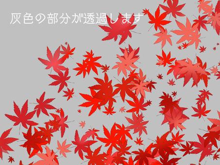 Autumn leaves (through)
