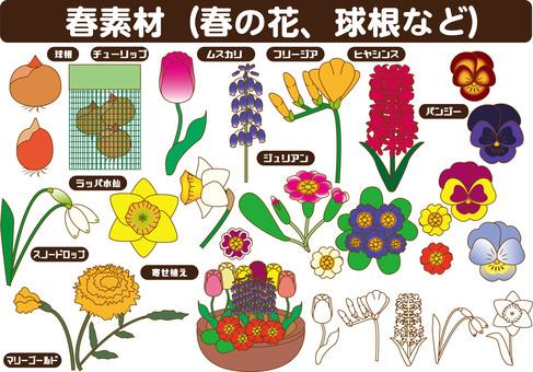 봄 꽃 여러가지