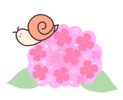 Hydrangea and snail