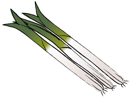 Japanese style long onion long onion