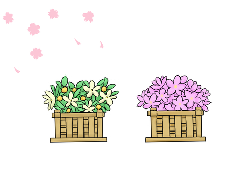 귤과 복숭아 꽃
