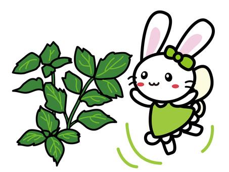 Aroma Usako (Patchouli)