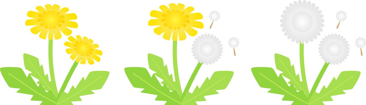 Illustration of dandelion and fluff