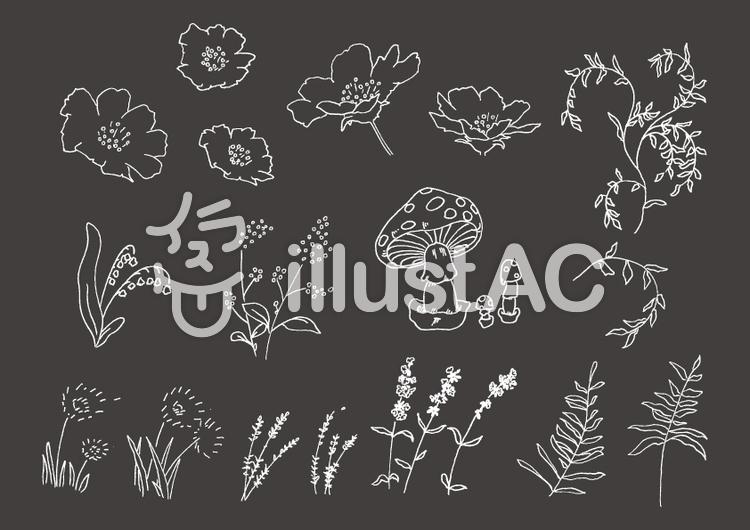 手描き植物セット(白)のイラスト