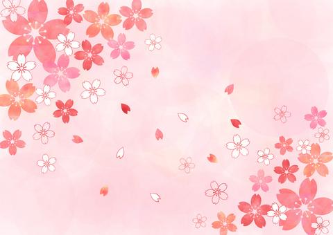 Cherry Pastel _ Pink Background 1823