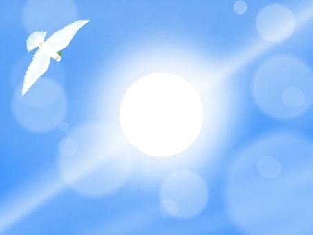 鴿子和太陽