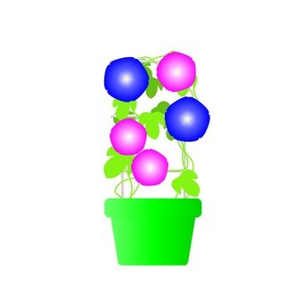 Summer fun poetry - morning glory potted plant
