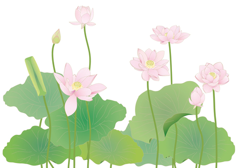 Lotus flower large size fine _ 7 rings _ horizontal size