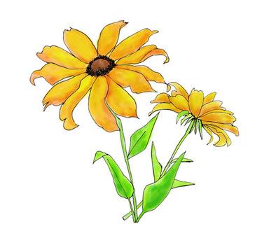 Small sunflower 1