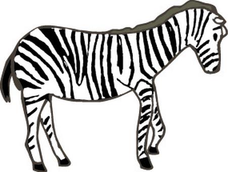 Zebra Africa Zoo Safari