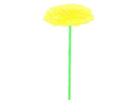 Dandelion_no leaves_colored pencil