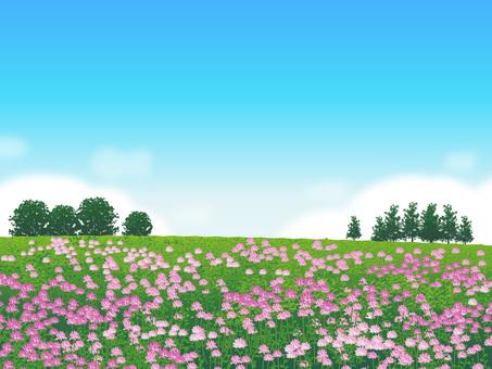 Plants of a flower of grassland Prairie landscape 07