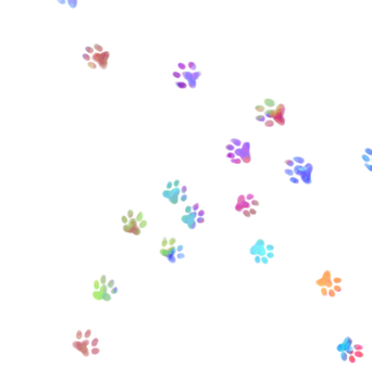 Cat's foot after 2