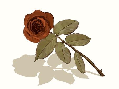 Red rose sepia