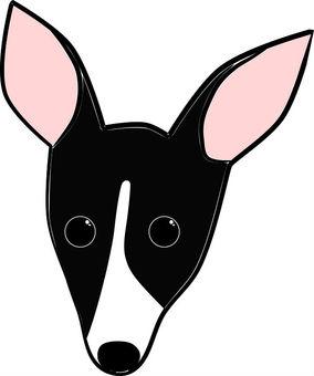 Puppy. Italian Greyhound