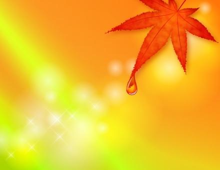 秋天的樹葉背景_與可用的楓樹_橙色