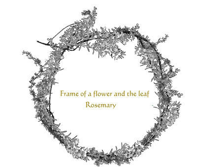 Flower frame Rosemary