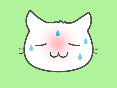 White cat / fever + sweating