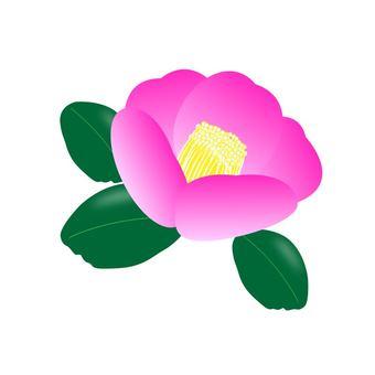 Camellia ①