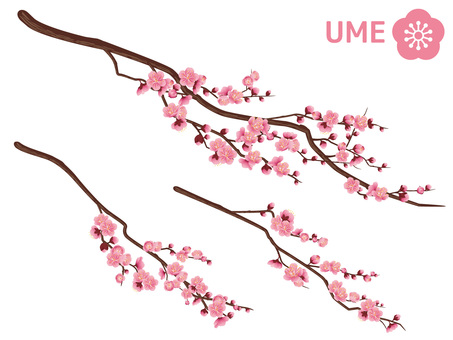 Cut out branches of New Year plum _ light pink 04