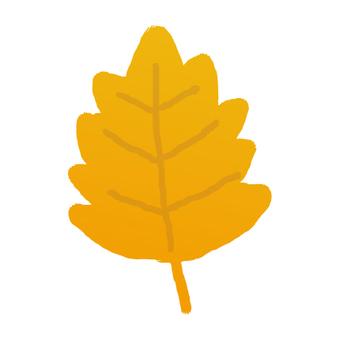 Fallen leaves _ beech