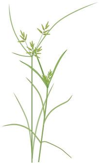Kayatsurugusa / weeds