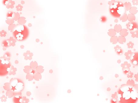 Sakura 15