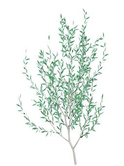tree_007_ olive _ 07