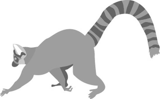 Wolverine lemur