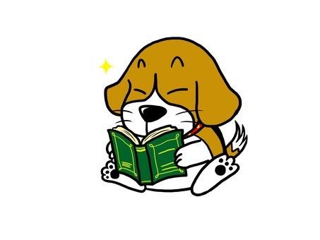 Beagle dog reading